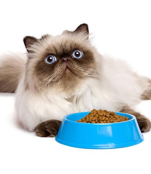 Alimenti Gatti
